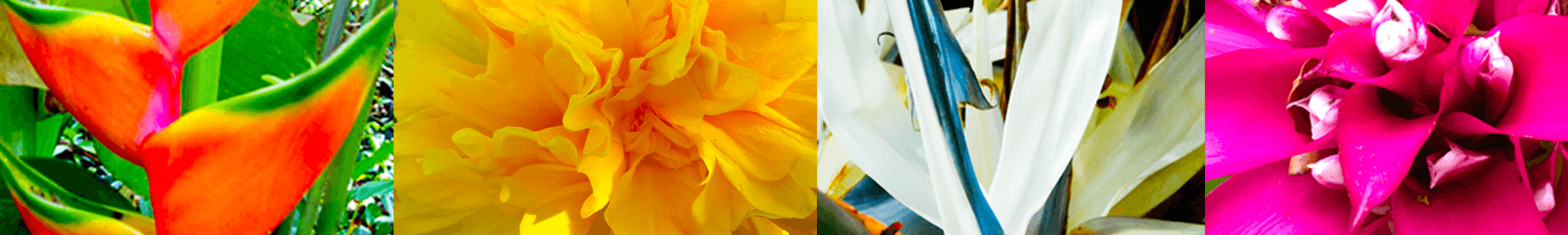 Flower Header
